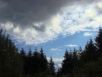 Δάσος Ελατιάς (Καρά-Ντερέ) - Δάσος Σημύδας
